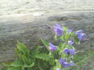 foto bloem-2
